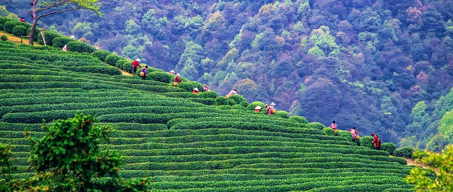 西湖龙坞茶镇